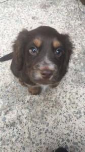 Pawesome puppy training Cumbria