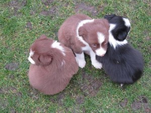 Puppies Pawesome Dog Training